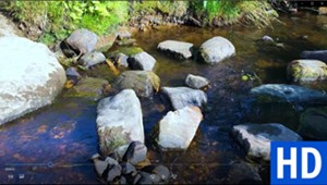 "<a href=""/go/zoom-video-005-brook-with-rocks"" target=""_blank"">Download</a>"